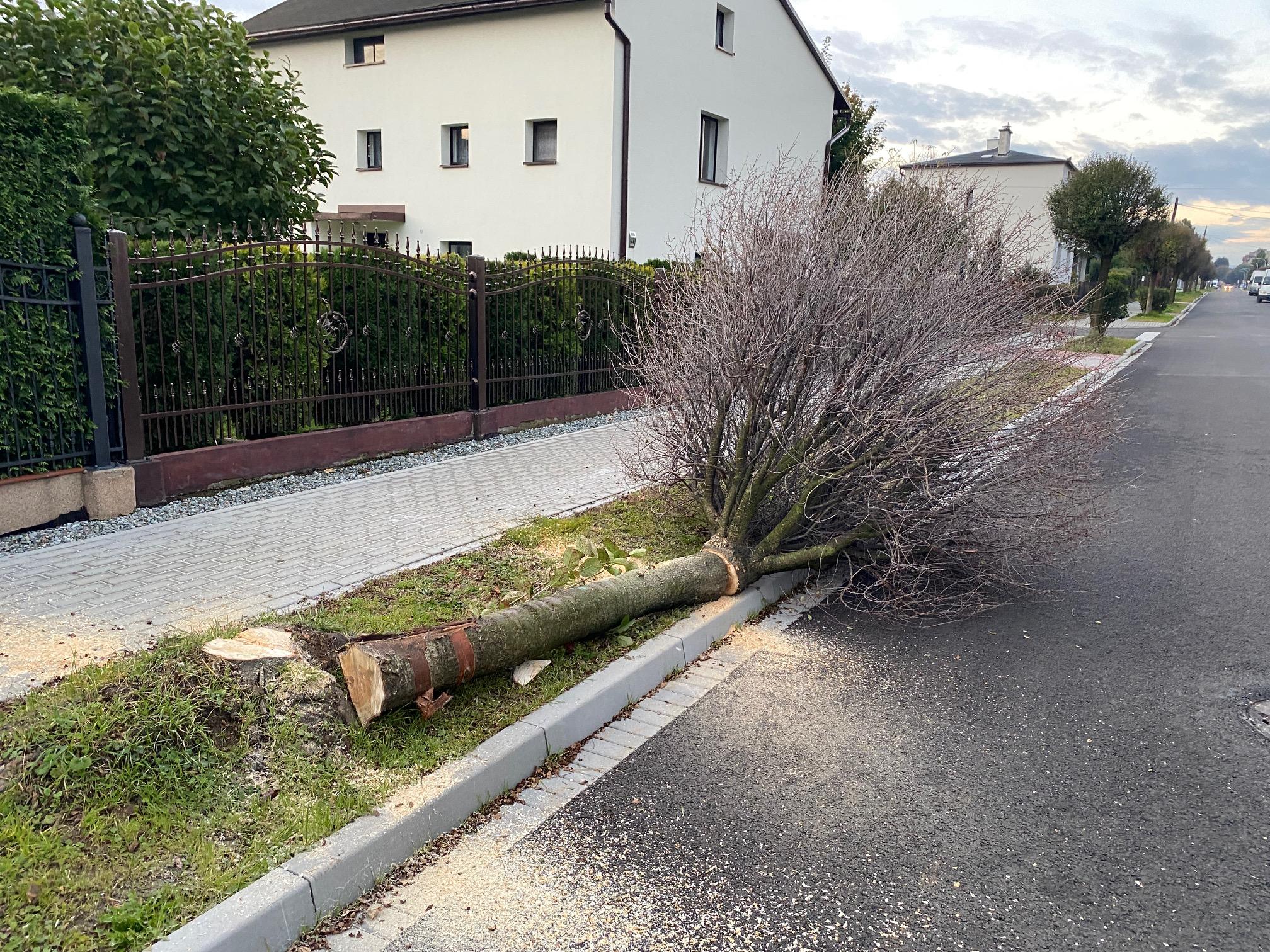 Kolejna rzeź drzew – widok jest przerażający